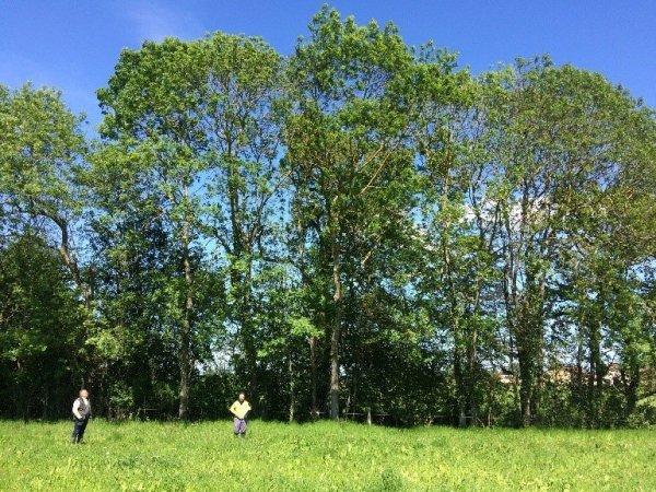 """Lire la suite de Journée d'échanges technique """"Les arbres champêtres, intérêts et défis pour les territoires à enjeux eau"""""""