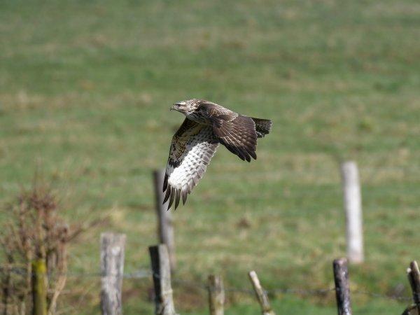 Lire la suite de Agribirds : Des méthodes et outils pour apprendre à observer les oiseaux sur les exploitations