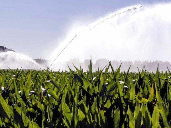 Lire la suite de Irrigation du maïs sous contrainte hydrique
