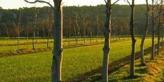 Lire la suite de Une enquête pour recenser vos besoins de formation en Agroforesterie !