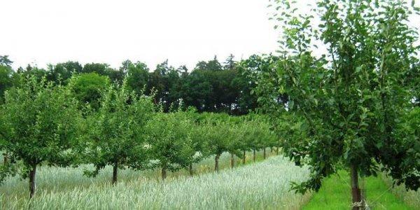 Lire la suite de [ARTICLE] Agroforesterie : cultiver à l'ombre des arbres, quel(s) intérêt(s) ?
