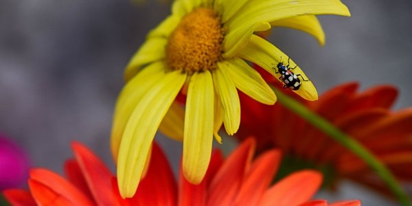 Lire la suite de Un cahier technique pour prendre en compte la biodiversité sur sa ferme !
