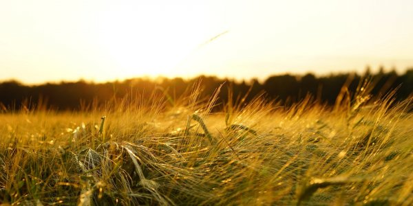 Lire la suite de Des webinaires d'1h sur l'agroécologie ou l'agriculture numérique