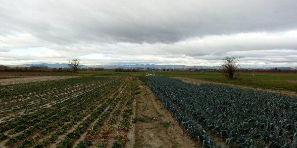Lire la suite de La Métropole rend visite aux agriculteurs du territoire