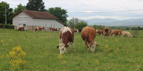 Lire la suite de Visites d'élevages dans l'Ouest lyonnais